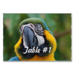 Blue and Gold Macaw Card