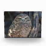 Burrowing Owl Acrylic Award