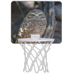 Burrowing Owl Mini Basketball Backboard