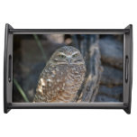 Burrowing Owl Serving Tray