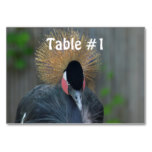 Curious African Crowned Crane Card