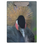 Curious African Crowned Crane Clipboard