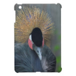 Curious African Crowned Crane Cover For The iPad Mini