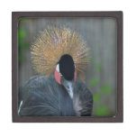 Curious African Crowned Crane Gift Box