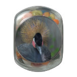 Curious African Crowned Crane Jelly Belly Candy Jar
