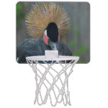 Curious African Crowned Crane Mini Basketball Backboard