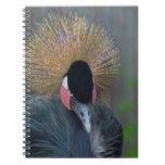 Curious African Crowned Crane Notebook