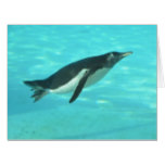 Penguin Swimming Underwater