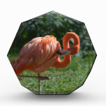 Perfect Pink Flamingo Acrylic Award