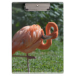 Perfect Pink Flamingo Clipboard