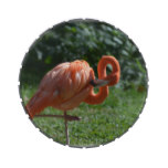Perfect Pink Flamingo Jelly Belly Candy Tin