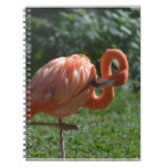 Perfect Pink Flamingo Notebook