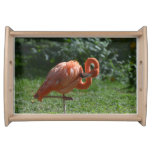 Perfect Pink Flamingo Serving Tray