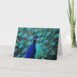 Pretty Peacock Greeting Card