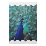 Pretty Peacock Kitchen Towel