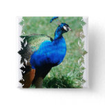 Pretty Peafowl  Button