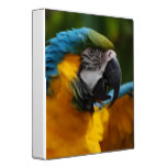 Ruffled Blue and Gold Macaw Binder