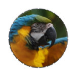 Ruffled Blue and Gold Macaw Jelly Belly Candy Tins