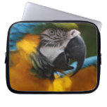 Ruffled Blue and Gold Macaw Laptop Sleeve