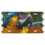 Ruffled Blue and Gold Macaw License Plate