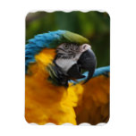 Ruffled Blue and Gold Macaw Magnet