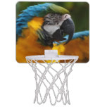 Ruffled Blue and Gold Macaw Mini Basketball Hoop