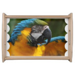 Ruffled Blue and Gold Macaw Serving Tray