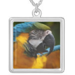 Ruffled Blue and Gold Macaw Silver Plated Necklace