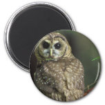 Spotted Owl Magnet