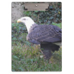 Standing American Bald Eagle Clipboard