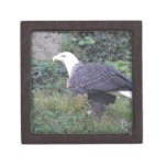 Standing American Bald Eagle Jewelry Box