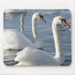 Swan Reflections Mouse Pads
