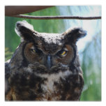 Wise Long Eared Owl Poster