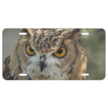 Wise Owl License Plate