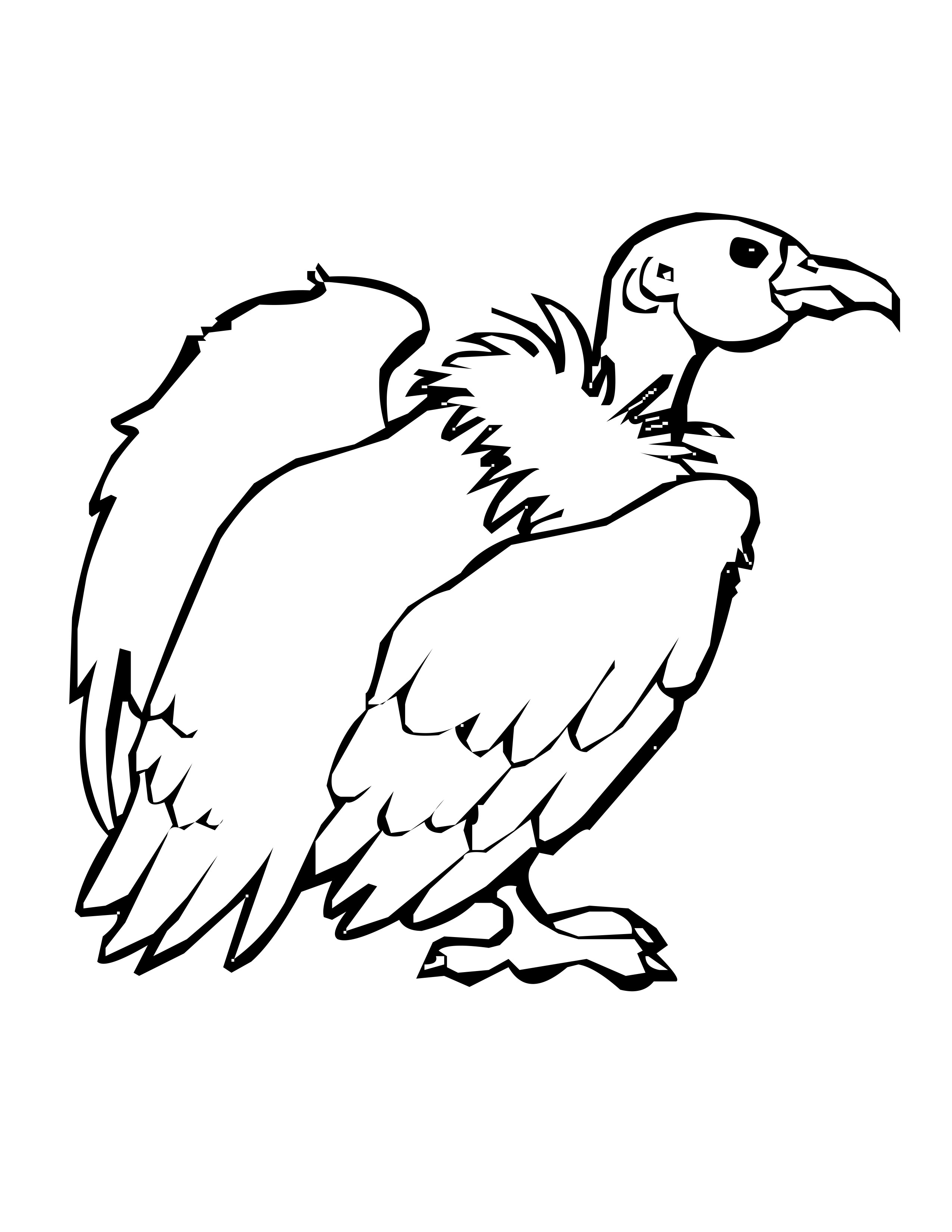Vulture Line Drawing Vulture
